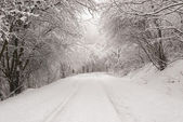 Forrest in winter scenery — Stock Photo