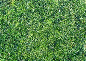 Grass closeup tecture — Stock Photo