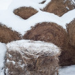 Haystack in winter - Stock Photo