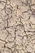 Dry land, dry scaly ground — Stock Photo