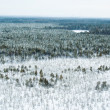 Stock Photo: Aerial view of winter forest