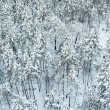 Aerial view of winter forest — Stock Photo
