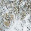 Aerial view of winter forest — Stock Photo #22508437