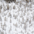 Aerial view of winter forest — Stock Photo #23854295
