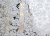 Donmuş kar taneleri — Stok fotoğraf