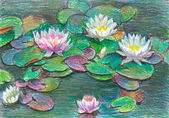 Water lillies — Stock Photo