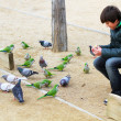 Boy feeding parrots and pigeons in Barcelona, Spain — Stock Photo