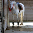 Horse in the stable — Stock Photo #27772533