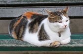 Very fluffy cat sits on a bench — Foto de Stock
