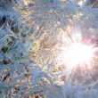 Morning sun in the winter forest. — Stock Photo