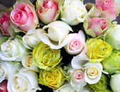 Roses in the shop — Stock Photo