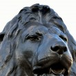 Foto de Stock  : Head of lion at trafalgar square