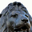 Stockfoto: Head of lion at trafalgar square