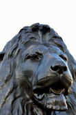 Head of lion at trafalgar square — Stock Photo