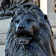 Foto de Stock  : Trafalgar square lion at base of nelsons column