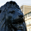 Lion at trafalgar square — Stock Photo