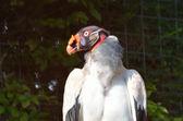看起来很奇怪的鸟 — 图库照片