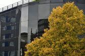 уиллис здание в ипсуич с деревом — Стоковое фото