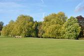 Anglický venkov na podzim — Stock fotografie