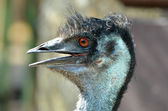 Head of Emu from Side — Stock Photo