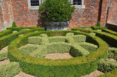 Decorative hedge in garden — Stock Photo