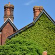 Ivy covered wall of house — Stock Photo