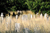 Gravestones in long grass — Stock Photo