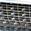 Classic Car radiator Grill — Stock Photo