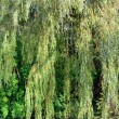 Willow tree over river — Stock Photo