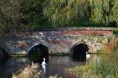 Vörös téglából épült híd hattyúk — Foto de Stock