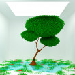 Tree in white room - Stock Photo