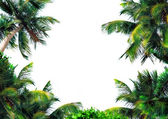 Palms background — Stock Photo