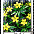 anemone ranunculoides — Stock Photo