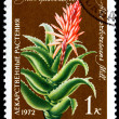Aloe Arborescens - Stock Photo