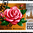 Stock Photo: Rose Morning Moscow