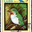 Todus Multicolor, from Series Cuban Birds — Stock Photo