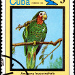 Amazona Leucocephala, from Series Cuban Birds — Stock Photo