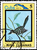 Mimus Polyglottos, from Series Cuban Birds — Stock Photo