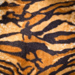 Tiger fur texture — Stock Photo