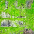 Green moss on the wall — Stock Photo
