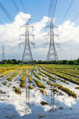 Electricity high voltage power post in paddy field — Stock Photo