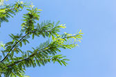 Green leaves against blue sky — Stock Photo