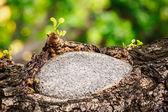 Beehive on tree — Stock Photo