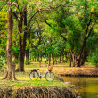 Bicycles under big tree in the park — Stock Photo
