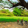 Bicycles under big tree in the park — Stock Photo #22253707