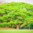 Big tree in the park — Stock Photo