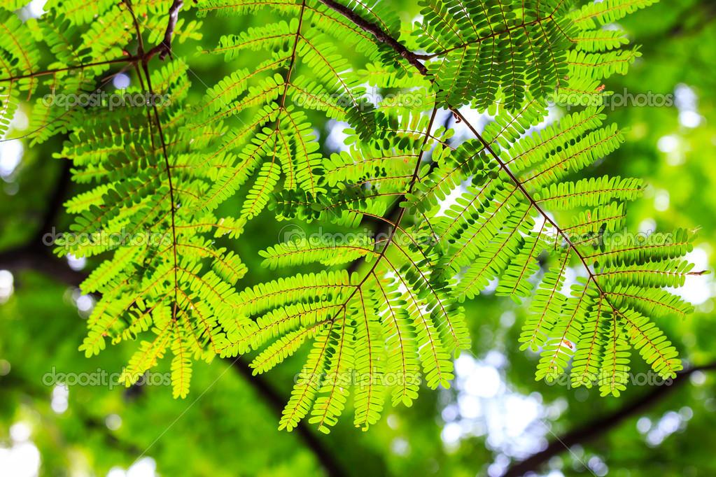 绿色的树叶为背景的