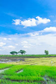 Paddy field in thailand — Stockfoto