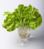 Lettuce with roots — Stock Photo