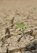 One small green tree in drought land — Stock Photo
